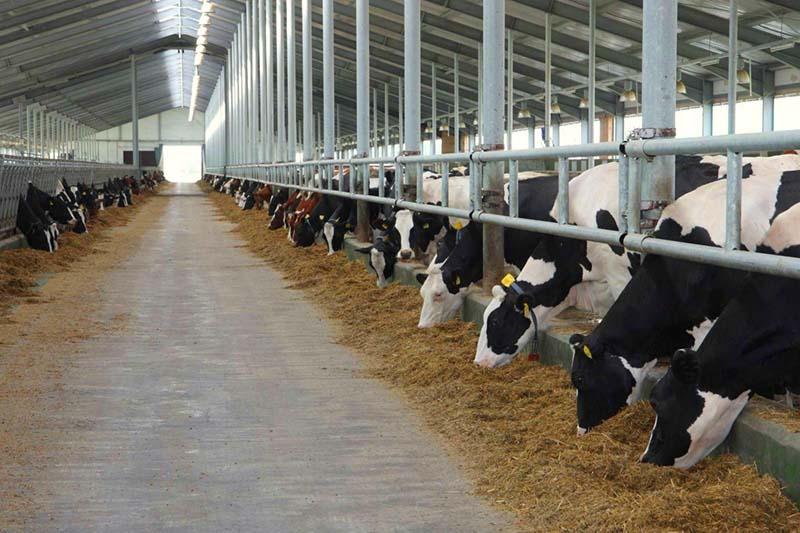 Продолжается завоз высокопродуктивного поголовья на фермы Рязанской области